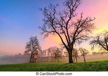 美しい, 別, 空, 色, 田園, 日没, 風景