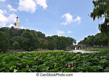 美しい, 北京, beihai, park:, 現場, 帝国