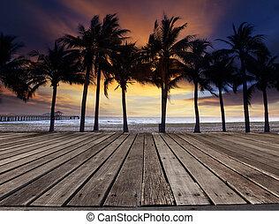 美しい, 古い, d, 木, 木, ココナッツ, 台地, 海, 浜