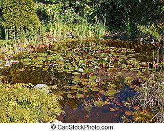 美しい, 園芸, 庭, 古典である, fish, 背景, 池