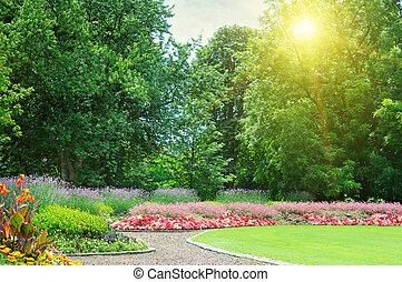美しい, 夏, 公園, 日の出