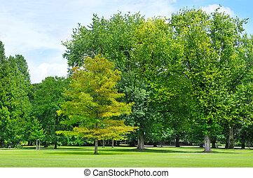 美しい, 夏, 緑, 芝生, 公園