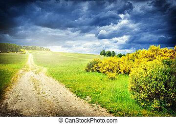 美しい, 夏, 風景, ∥で∥, 田舎の道路