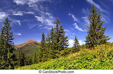 美しい, 夏, 風景, 山
