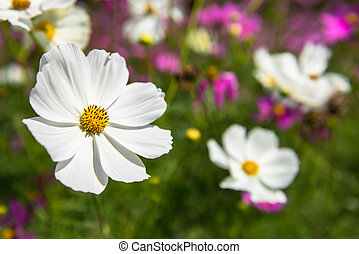 美しい, 宇宙の花