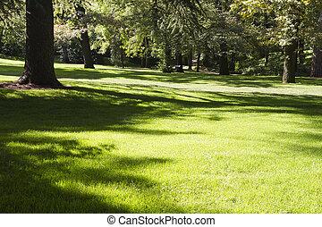 美しい, 屋外, 葉が多い, 公園, 木