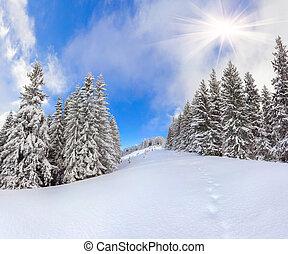 美しい, 山の景色, 冬, forest.