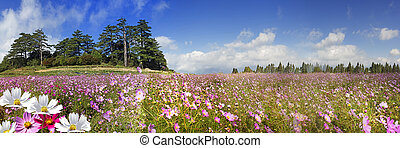 美しい, 山, 花, 高く, イメージ投射, 背景, すてきである, 光景