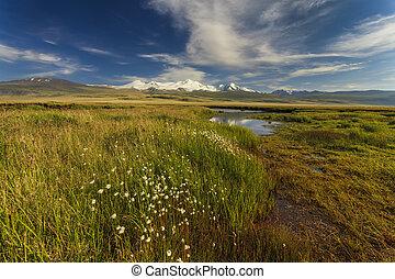 美しい, 山, 高く, river., 風景