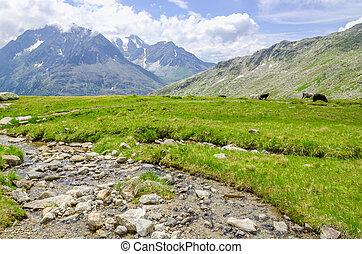美しい, 川, オーストリア, 風景, 高山