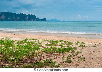 美しい, 州, krabi, 砂, タイ, 花, 浜, 山, 光景