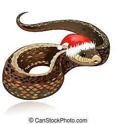美しい, 帽子, ヘビ, santa