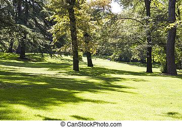 美しい, 平和である, 葉が多い, 公園, 木