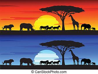 美しい, 日没, 背景, 上に, afri
