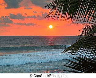 美しい, 日没, 葉, やし, 海