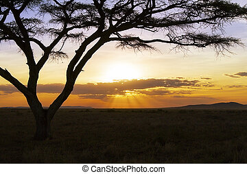 美しい, 日没,  serengeti, アフリカ