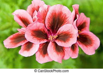 美しい, 春の花, ぐっと近づいて