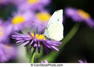 美しい, 春の花, ∥で∥, 蝶, 庭で