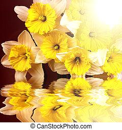 美しい, 春の花, 反映, 水
