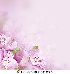 美しい, 春の花, 背景, 自然