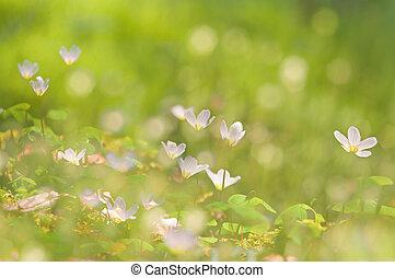 美しい, 春, ぼんやりさせられた, 緑の背景, 花