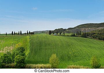 美しい, 春, トスカーナ, 風景