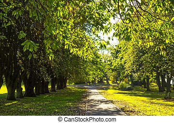 美しい, 春, 木, 公園, 線, 道