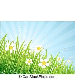 美しい, 春, 牧草地