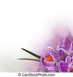 美しい, 春, -, 背景, 花, 花, ボーダー