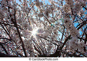 美しい, 春, 花