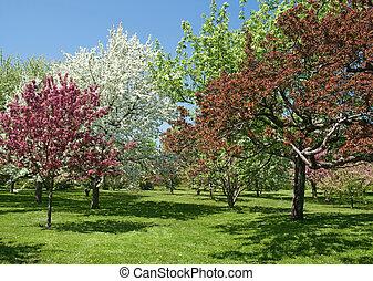 美しい, 春, 花, 木