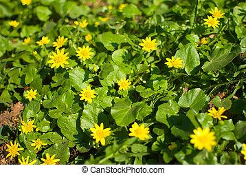 美しい, 春, 葉, 黄色緑, 背景, 花