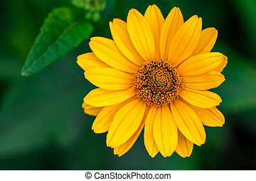 美しい, 春, 黄色緑, 背景, 花