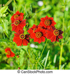 美しい, 春, flowers., 赤い背景