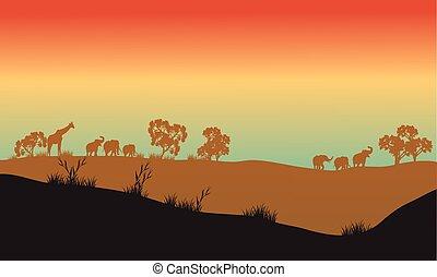 美しい, 景色, 中に, アフリカ, 公園