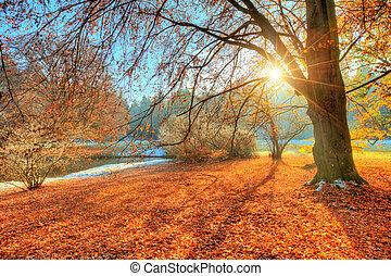 美しい, 有色人種, 秋, 写真撮影, 木, 風景