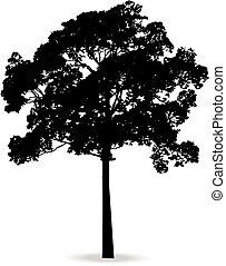 美しい, 木, ベクトル, シルエット