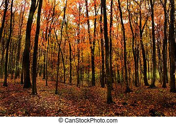 美しい, 森林