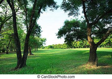 美しい, 植物, 草, スペース, ライト, 多目的, 公園, 木, 朝, フィールド, 緑, 見通し, 新たに, コピー, 公衆