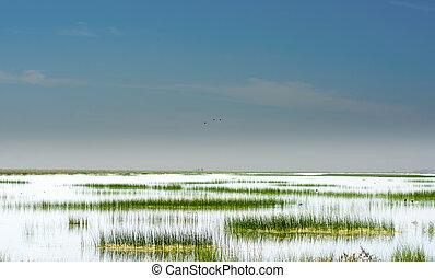 美しい, 沼地, 風景