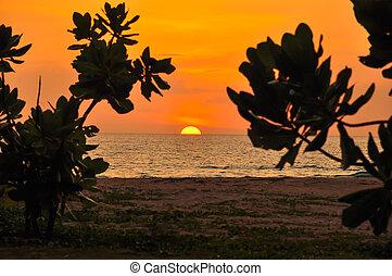 美しい, 浜, シルエット, 日没の 空