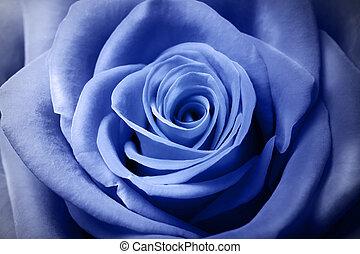 美しい, 淡いブルー, バラ