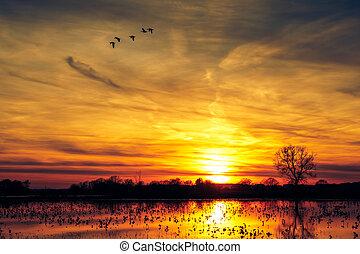 美しい, 湖, 空, 日没, カラフルである