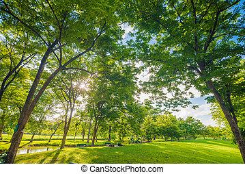 美しい, 牧草地, そして, 木, 公園