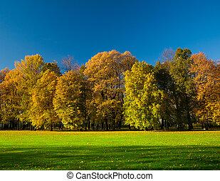 美しい, 牧草地, 公園