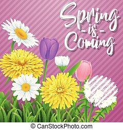 美しい, 牧草地, 紫色, 春, 背景, coming., 花, しまのある