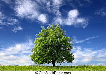 美しい, 環境, きれいにしなさい