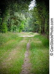 美しい, 環境, まっすぐに, 緑, 道