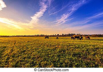美しい, 田園 景色