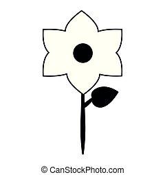 美しい, 白い花, 黒, 隔離された